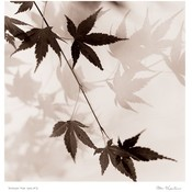 Japanese Maple Leaves No. 1 Wholesale Bulk