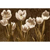 Baroque Tulips Wholesale Bulk