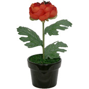 Potted Plant - Fiery Buttercup
