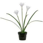 Potted Plant - White Iris