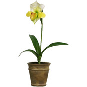 Potted Plant - Lady Slipper