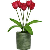 Potted Plant - Dutch Tulips