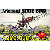 Arkansas Postcard 12129 State Bird Wholesale Bulk