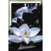 Arkansas Postcard 12164 Arkansas Magnolia Wholesale Bulk