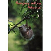 Arkansas Postcard 12175 Hangin Out Wholesale Bulk