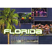 Florida Postcard- Scenic Multiview
