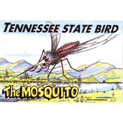 Tennessee Postcard- State Bird