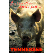 Tennessee Postcard- Pretty Face