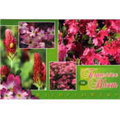 Tennessee Postcard- Wildflowers Multiview