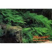 Missouri Postcard 12826 Wild Fern Grows