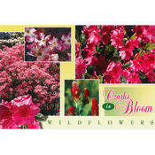 Ozarks Postcard 13031 Ozark Wildflowers Wholesale Bulk