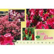 Ozarks Postcard 13031 Ozark Wildflowers Wholesale Bulk