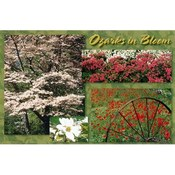 Ozarks Postcard 13032 Ozark In Bloom Wholesale Bulk