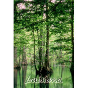 Louisiana Postcard 13207 Swamp