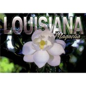 Louisiana Postcard 13217 Magnolia