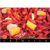 Louisiana Postcard 13228 Crawfish