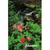 Arkansas Postcard Ar149 Kings River Trail Wholesale Bulk