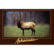 Arkansas Postcard Ar165 Arkansas Elk Wholesale Bulk