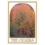 Jenkins Ozarks Vertical Postcard- Fall Trees Wholesale Bulk