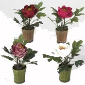 12' Classic Peony, 4 Assorted. Wholesale Bulk