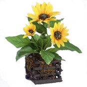 11' Sunflower in Square Wood Planter Wholesale Bulk
