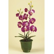 Kigi 28' Everlasting Orchid with Pot Wholesale Bulk