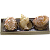 Whelk, Conch, & Nautilus Novelty Candle Set