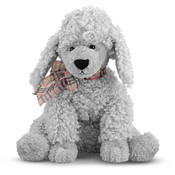Curley Grey Poodle