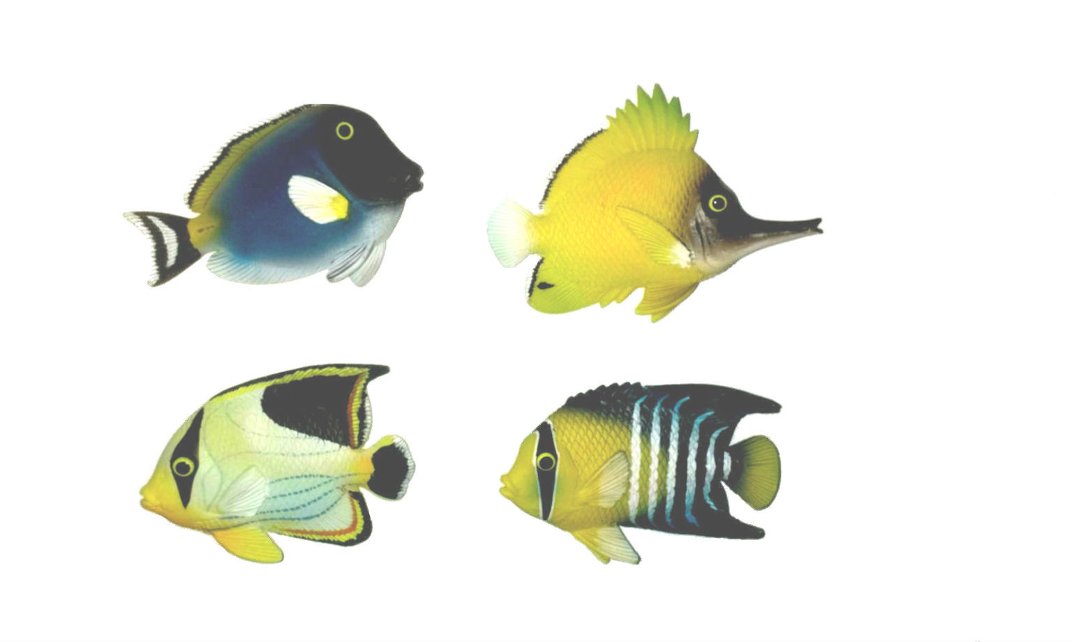 Wholesale poly stone tropical fish magnets sku 2128269 for Wholesale tropical fish