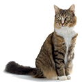 Wholesale Pet Supplies - Buy Pet Products in Bulk - Distributor Pet Supplies